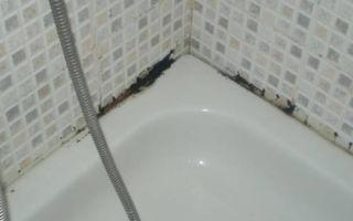 Как можно избавиться от черной плесени в ванной комнате, какие средства помогут?